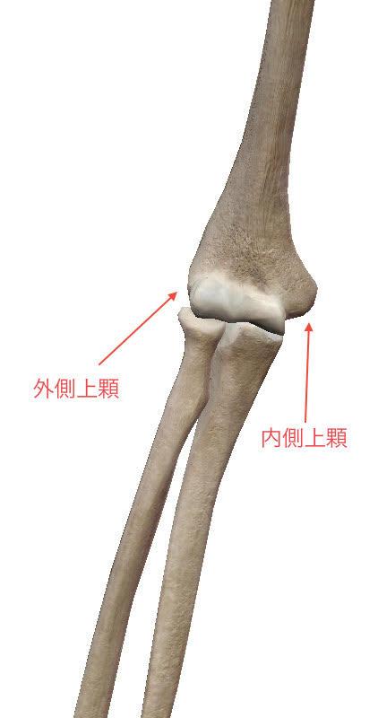 肘が痛い(外側):外側上顆炎について詳しく解説